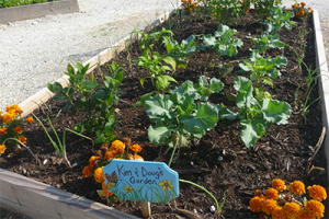 Community-gardens-small-pic