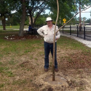 Professor Wes Higgins and our new gumbo limbo tree in the Children's Garden