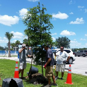 Lee County Parks & Recreation staff planting a new tree to replace one of the 300+ lost to Hurricane Irma