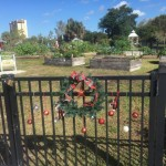 Lakes Park Community Garden looking neat and pretty for the holidays