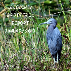 Bird Patrol Report, Lakes Regional Park, Fort Myers, FL